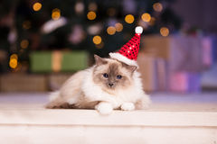 Cat. Christmans party, winter holidays cat with gift box. New ye Stock Photo