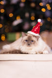 Cat. Christmans party, winter holidays cat with gift box. New ye Stock Photography