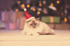 Cat. Christmans party, winter holidays cat with gift box. New ye Stock Images