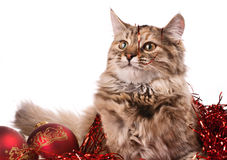 Cat and Christmas. Decoration in disorder on white background Royalty Free Stock Images