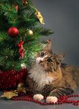 Cat and christmas Stock Photo