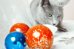 Cat and Christmas balls Stock Photography