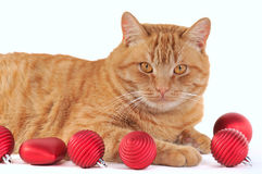 Cat with Christmas Bals Stock Photography