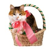 Cat in a Christmas Basket. The kitty with pink bow in Christmas Basket. Isolated Royalty Free Stock Photos
