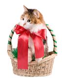 Cat in a Christmas Basket. The kitty with red bow in Christmas Basket. Isolated Stock Photo