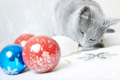 Cat with Christmas baubles Royalty Free Stock Photos