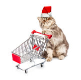 Cat in a Christmas cap with a cart on white Royalty Free Stock Photos