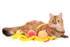 Cat with Christmas decoration Stock Photo