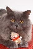 Cat with christmas decoration. Snowman stock photography