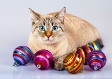 Cat with Christmas decoration Royalty Free Stock Photography