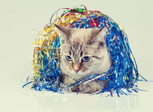 Cat with Christmas decoration Stock Images