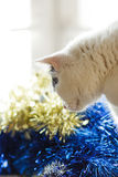 Cat and Christmas decoration in gold and blue color Stock Images