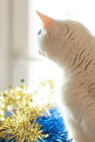 Cat and Christmas decoration in gold and blue color Royalty Free Stock Photos