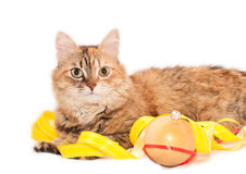 Cat and Christmas decoration Stock Image