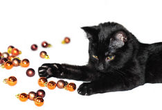 Cat and christmas decorations. Black cat plays with christmas decorations Stock Photo