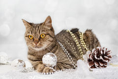 cat with Christmas decorations Stock Photo