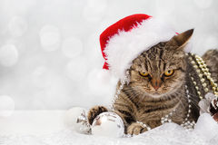 Cat with Christmas decorations Royalty Free Stock Photography