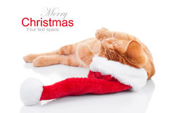 Christmas Santa Cat Royalty Free Stock Image