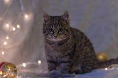 Cat and Christmas garland Stock Photos