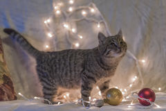 Cat and Christmas garland Stock Photography