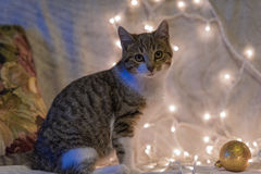 Cat and Christmas garland Royalty Free Stock Photos