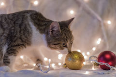 Cat and Christmas garland Royalty Free Stock Images
