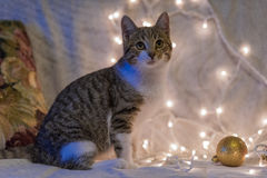Cat and Christmas garland Stock Image