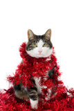Cat with Christmas garlands Royalty Free Stock Images