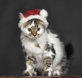 Cat in Christmas hat Royalty Free Stock Photos