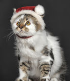 Cat in Christmas hat Royalty Free Stock Images