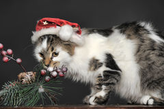 Cat in Christmas hat. Christmas cat in red cap Royalty Free Stock Image