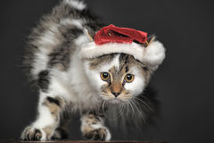 Cat in Christmas hat Stock Photography