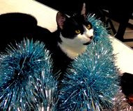 Cat and Christmas Royalty Free Stock Image