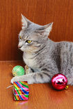 Cat and christmas ornament Stock Photos