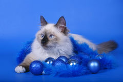 Cat with Christmas ornaments. Stock Image