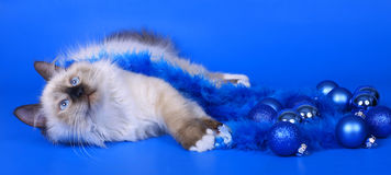 Cat with Christmas ornaments. Stock Photos