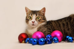 Cat with christmas ornaments Stock Image