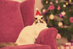 Cat. Christmas party, winter holidays cat with gift box. New year cat. christmas tree in interior Stock Photography