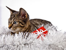 Cat, Christmas, present Royalty Free Stock Images