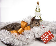 Cat, Christmas, present Stock Photography