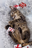 Cat, Christmas, present Royalty Free Stock Image