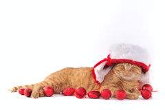 Cat in Christmas Settings Royalty Free Stock Photo