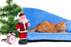 Cat on a Christmas Sofa Royalty Free Stock Images
