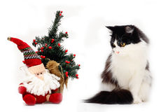 Cat and christmas staf Stock Images