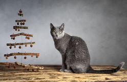 Cat Christmas Stock Image