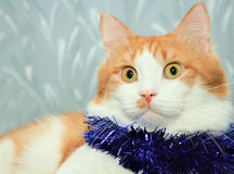 Cat with christmas tinsel decoration Royalty Free Stock Photo