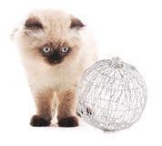 Cat with Christmas toy. Royalty Free Stock Photography