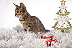 Cat and Christmas tree, Christmas, present Royalty Free Stock Image