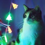 Cat Christmas. Christmas tree cutie cat stock images