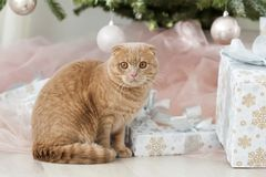 Cat with christmas tree and gift Royalty Free Stock Photography
